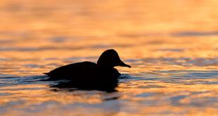 golden hour - Oasi WWF Lago di Burano